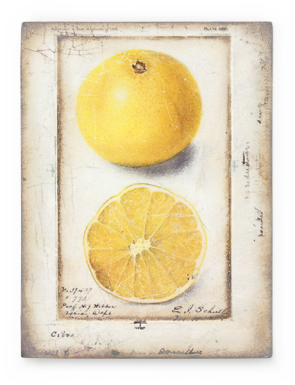 Sid Dickens Tile Citron